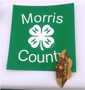 Morris County 4-H Fair @ Chubb Park | Chester | New Jersey | United States